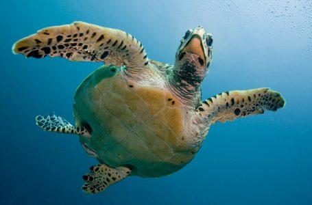 Родилният дом на костенурките в Коста Рика
