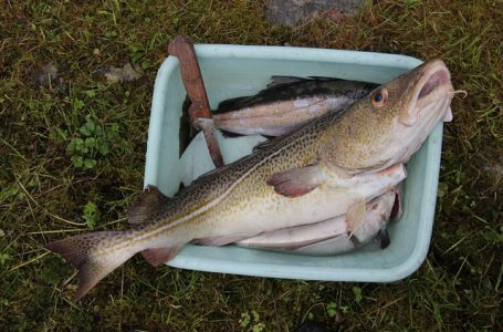 Сушена риба треска от Ним, Франция