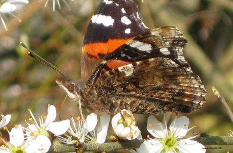 Пеперуди в цифри