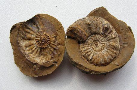 Как се образуват фосили