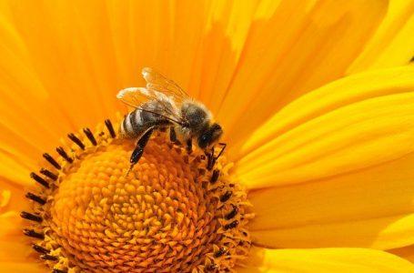 Le rôle des insectes dans la nature