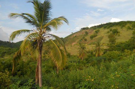 Haïti, l'île des Grandes Antilles